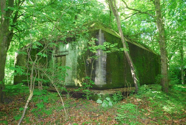 Bunkers in het Staelduinse Bos - Geschiedenis van Zuid-Holland