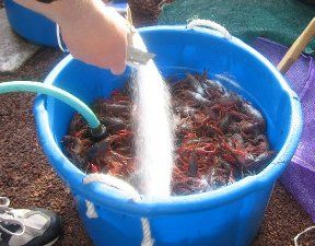 Crawfish Boil How to - With tips for portions... you  know when you're not trying to feed 35 people.