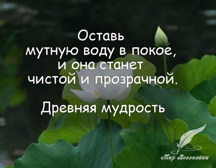 Цитаты, стихи, мысли, истории