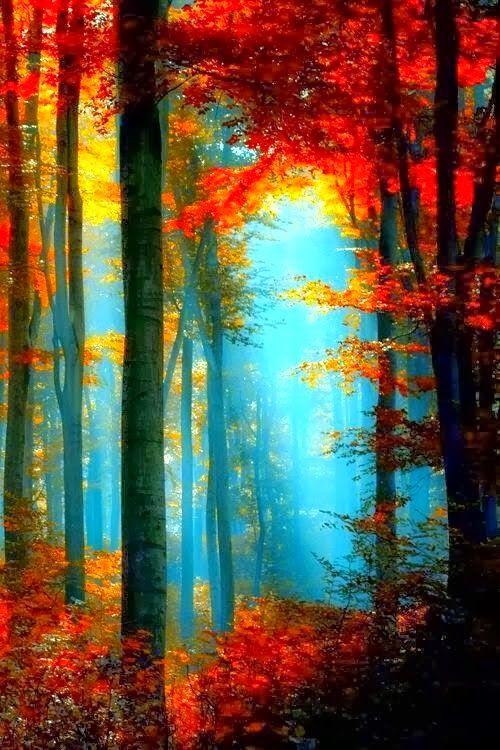 Beautiful Sunlight Through The Trees in Autumn