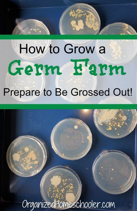 It is easy to grow a germ farm! This provides a hands-on lesson on bacteria (and the importance of washing hands!)