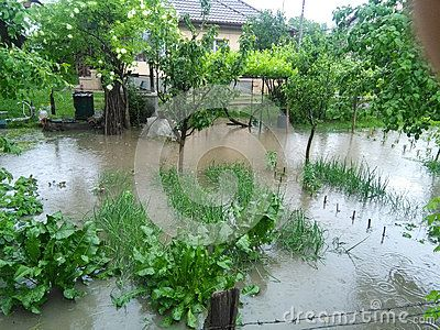 Garden with home agriculture under water after a heavy rain
