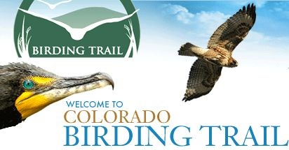 Colorado Birding Trail : Exploring Wild Colorado//AWESOME LINK