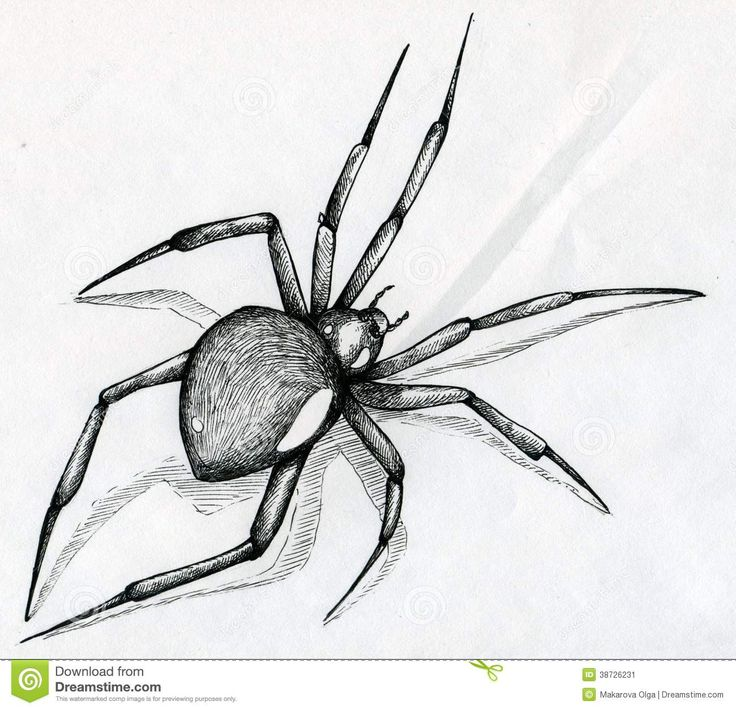 Black Widow Spider Drawing Stock Image - Image: 38726231