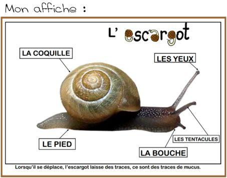 Escargot …