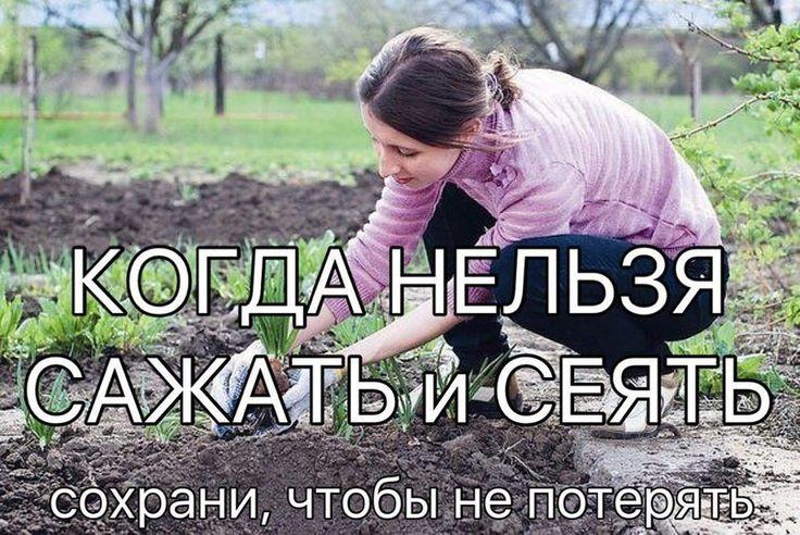 Народные приметы для садоводов-огородников! - Картофель нельзя сажать на Вербной неделе, по средам и субботам - будет портиться. - Если весна ранняя, то капусту, как и лук сеют на четвертой неделе Ве…