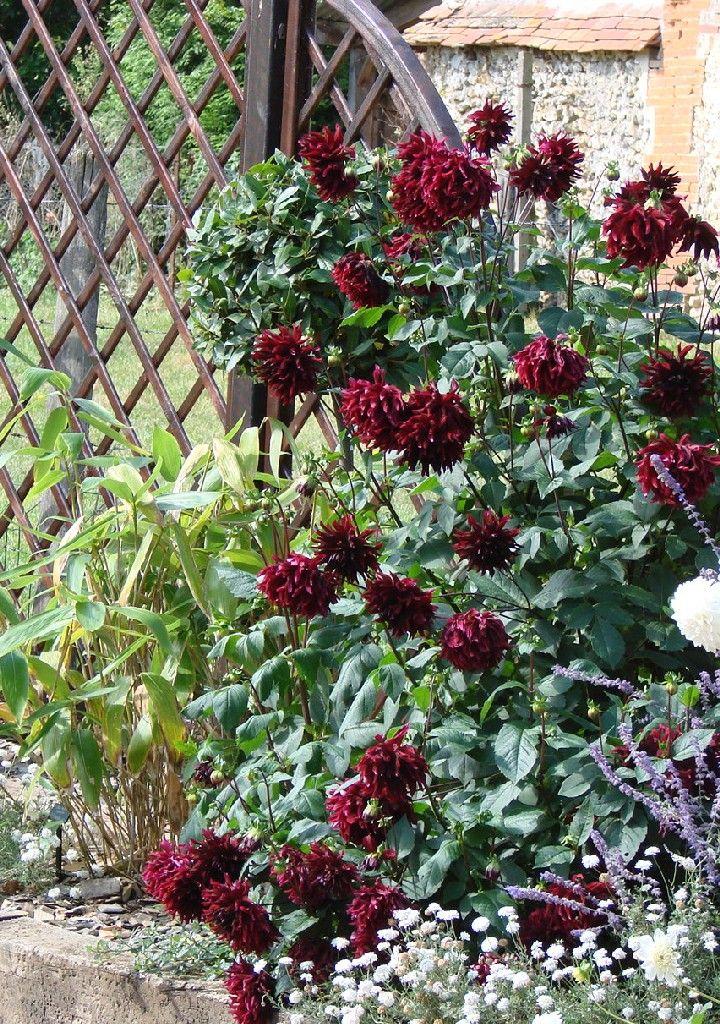 Retenues talus bois plantes aromatiques jardin m di val for Arbuste jardin japonais