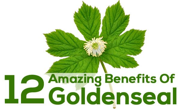 Benefits of echinacea and goldenseal