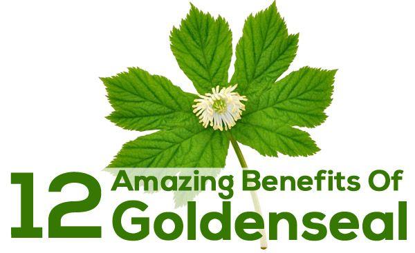 benefits of goldenseal herb