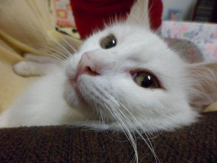 """Os gatos vivem cerca de 15 a 20 anos e os domésticos têm uma expectativa de vida maior pois não estão suscetíveis a brigas e acidentes como os que vivem nas ruas. Os donos de felinos sabem que seus bichanos adoram escalar, pular, arranhar quase sempre um móvel ou tapete. Curiosos, eles sempre exploram o...<br /><a class=""""more-link"""" href=""""https://catracalivre.com.br/geral/negocio-urbanidade/indicacao/moveis-e-objetos-de-decoracao-para-entreter-os-gatos/"""">Continue lendo »</a>"""