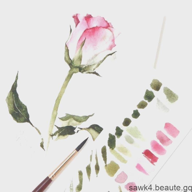 Rose A L Aquarelle Aquarelle Rose Aquarelle Rose Aquarelle