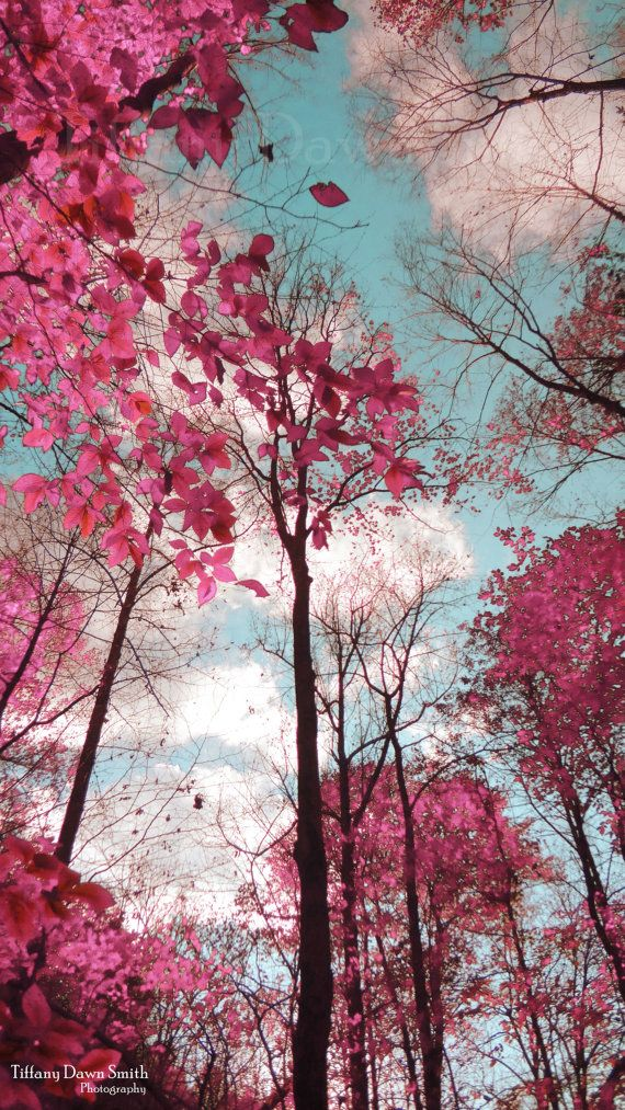 Panther Branch Trail trees sky pink clouds by TiffanyDawnSmith, $30.00