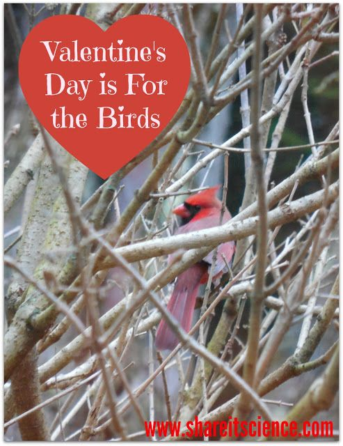 valentine u0026 39 s day is for the birds  learn how to make some