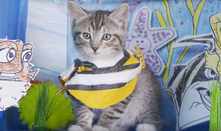 kitten videos1 - cute kittens #kittens #kittensvideo #cutekittens #cats #cutecats