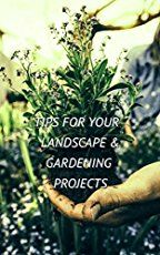 Pineapple Bush   How to Grow from its Top   Gardening Tips 'n Ideas