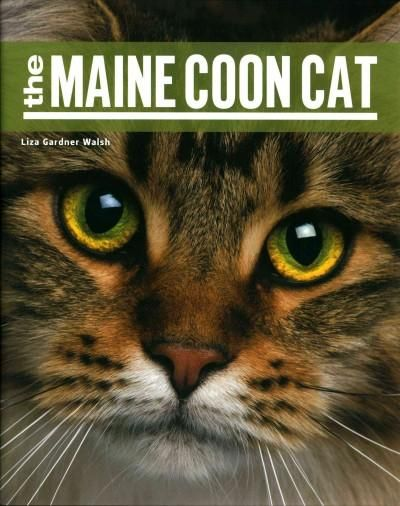 The Maine Coon is arguably the most popular breed of cat in the United States…