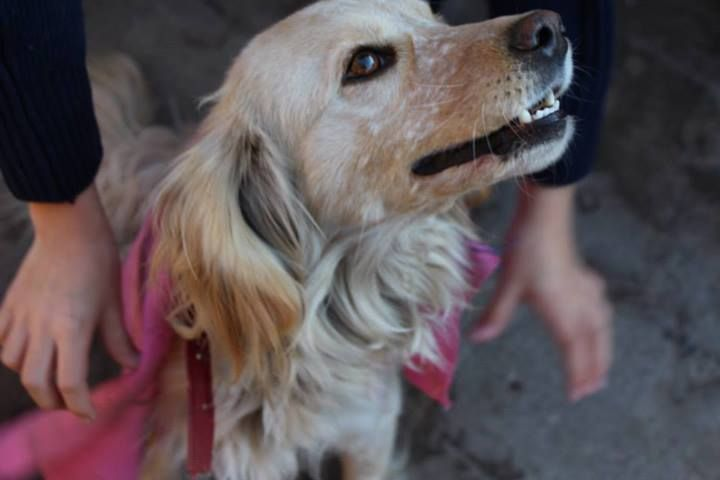 Princesa #dog #cachorro #perro #mascota