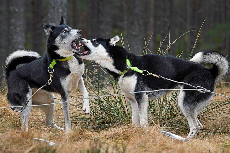 Таких крутых портретов собак еще никто не делал http://kleinburd.ru/news/takix-krutyx-portretov-sobak-eshhe-nikto-ne-delal/  Алисия Змысловска — молодой фотограф из Польши. С самого раннего детства она полюбила собак. А позже у нее появилась еще одна страсть — фотография. Так она стала фотографом, который специализируется на съемках домашних питомцев. Алисии всего 19, но ее творчество уже вызывает восторг. Мы выбрали несколько невероятно ярких и живых фотографий из ее работ. Это […]