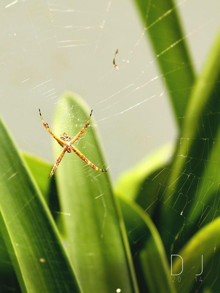 #spider #web