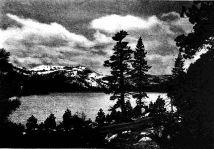 survivors of the donner party essay What the donner party ate in the final days as well as the memories of some survivors, supports that the trapped members first ate all of their animals, including captured mice and the family dogs, as well as wild game.