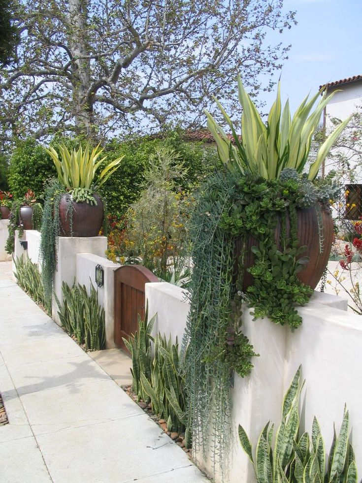 Potted plants home landscape mediterranean with drought tolerant entry gate spanish revival