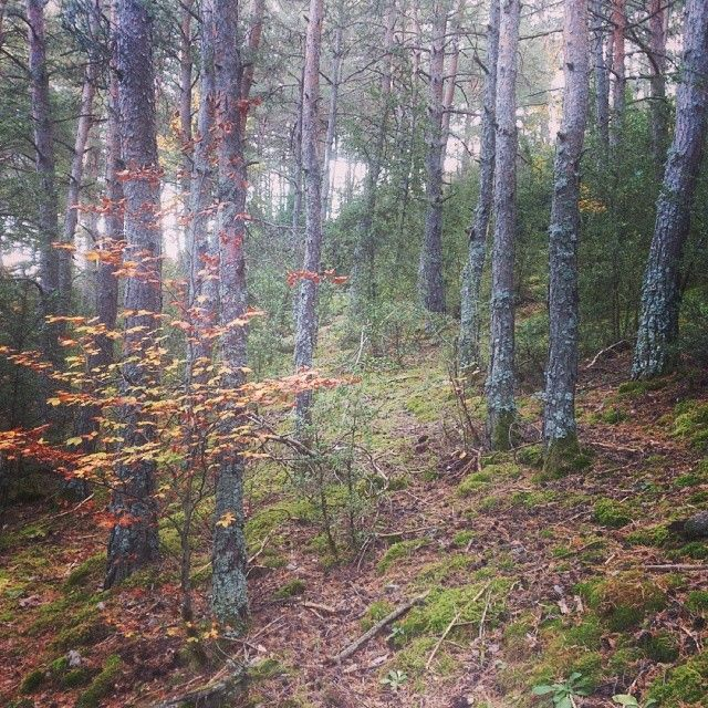 Bosc de bolets - Mushroms forest al/ in #PallarsJussà #Pirineus #Lleida #Catalunya