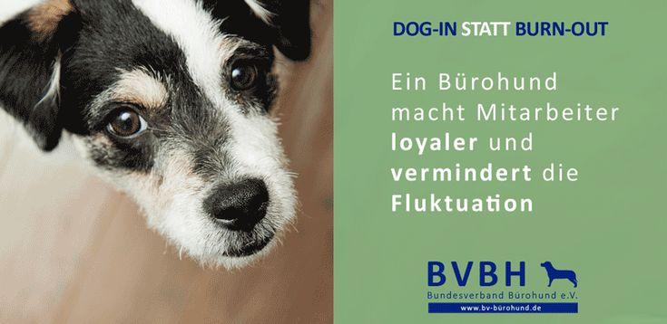 Infocard: Bürohund Loyalität