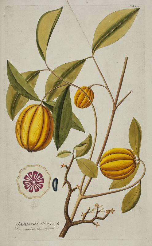 Brindleberry Icones Plantarum Medicinalium. In eight volumes, (Vienna, 1788-1803)  Author: PLENCK, Joseph Jacob (1733-1807)
