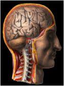 Traumatic Brain Injury: Symptoms And Signs. Glasgow Coma Scale. Brainlaw.com