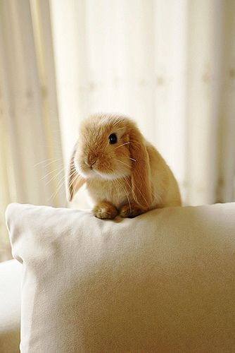 Omgawd could this little bunny be any cuter!?!?! Love yew bunny...