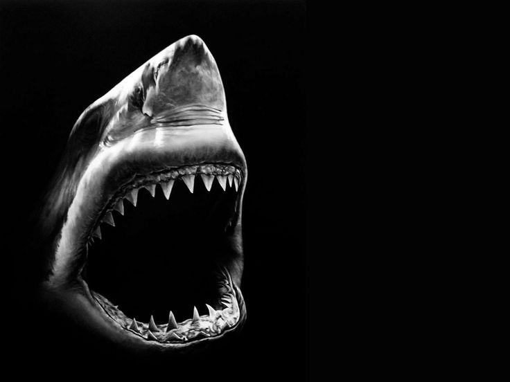 Great White Shark iPhone Wallpapers iphone wallpapers and all