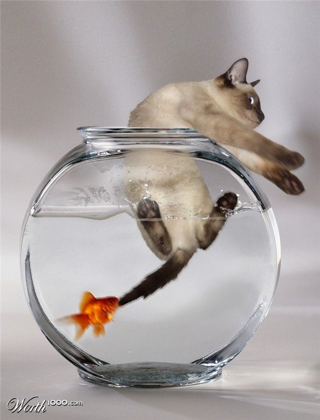 """When the Goldfish Turns!"" LOL!"