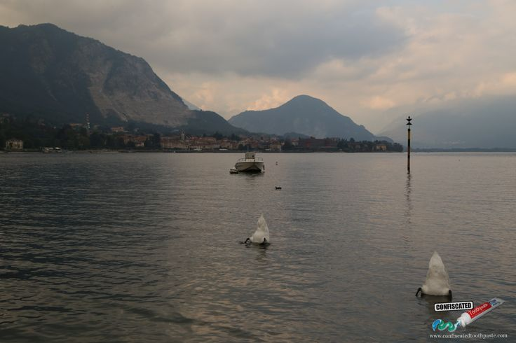 Two swans mooning me. Lago Maggiore, Italy. A Roadtrip through the Swiss Alps from Paris to Italy --> http://www.confiscatedtoothpaste.com/a-roadtrip-through-the-swiss-alps-from-paris-to-italy/