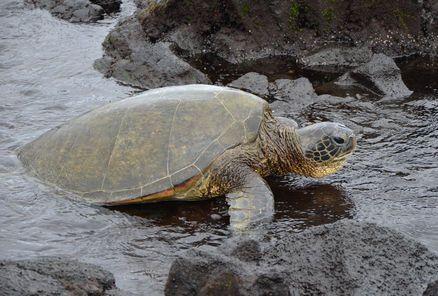 parc national des volcans d'hawai   Visite en petit groupe à Big Island : Parc national des Volcans d ...