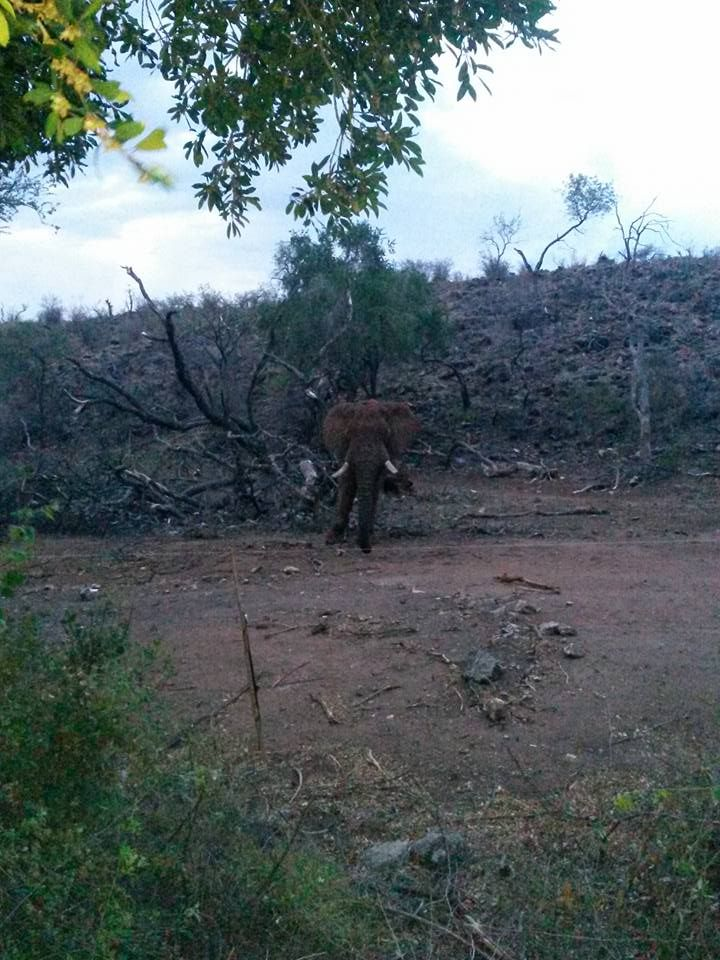 View from the Main pool. Elephant stare down right in front of the Lodge Photo Credit: Chantelle Terblanche