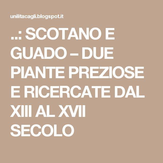 ..: SCOTANO E GUADO – DUE PIANTE PREZIOSE E  RICERCATE DAL XIII AL XVII SECOLO