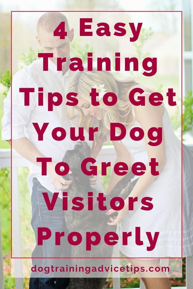 How To Deal With Aggressive Dog Behavior Problems Dog Training