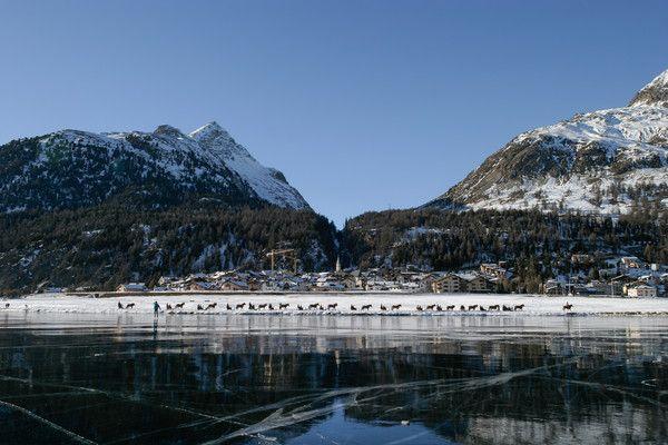 Silvaplana, Oberengadin, Graubünden, Schweiz