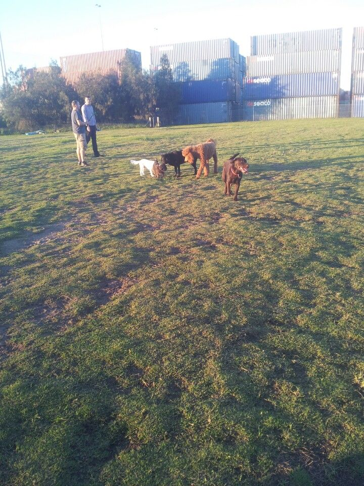 Tempe Dog Park in Tempe, NSW
