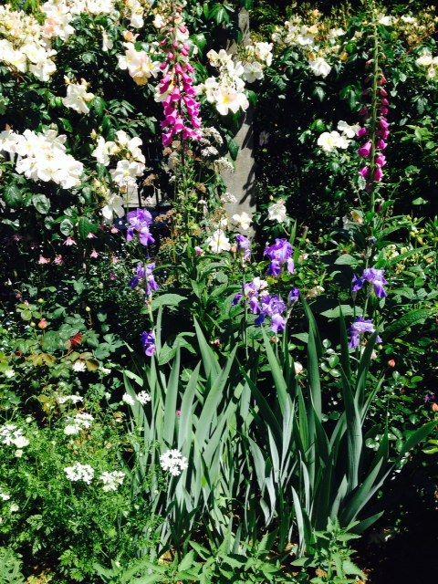 bearded iris, roses, foxgloves, country cottage border at La Rosaleda