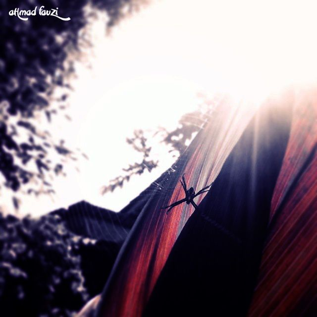 spider by ahmad fauzy pict