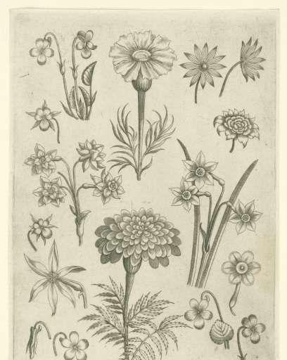 Verschillende bloemen, viooltjes en narcissen, Adriaen Collaert, 1570 - voor 1618 - Rijksmuseum