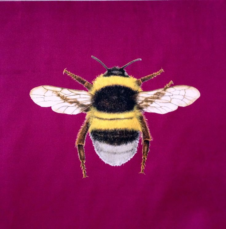 Velvet Bumblebee Cushion Panel Berry  £6