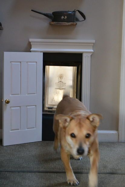 Diy Dog Doors 182 best diy for the dogs images on pinterest | dog stuff, dog and