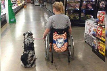 Un extraño no escuchó cuando ella le dijo que no acariciara a su perro de servicio
