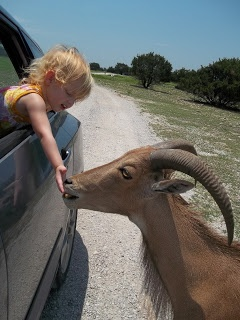 Family Fun: Topsey Exotic Ranch & Drive Thru Safari. 20-25 minutes from Fort Hood