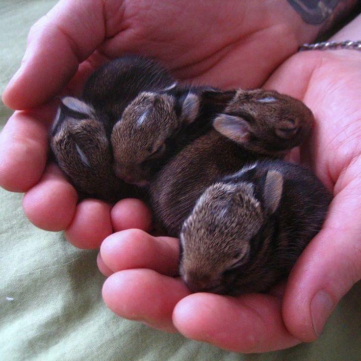 teeny baby bunnies...