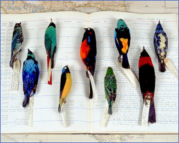 Best Dead Birds Images On Pinterest The Birds Museum - Map of museums in the us