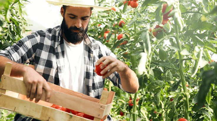 20 Most Profitable Crops Small Farms Can Grow and Sell
