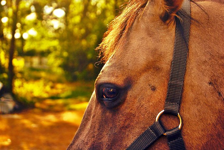 #polishhorse #sunset #sunsethorse #summer #summerinspiration